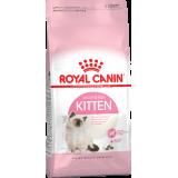 Выбираем сухой корм для котенка из линейки Royal Canin